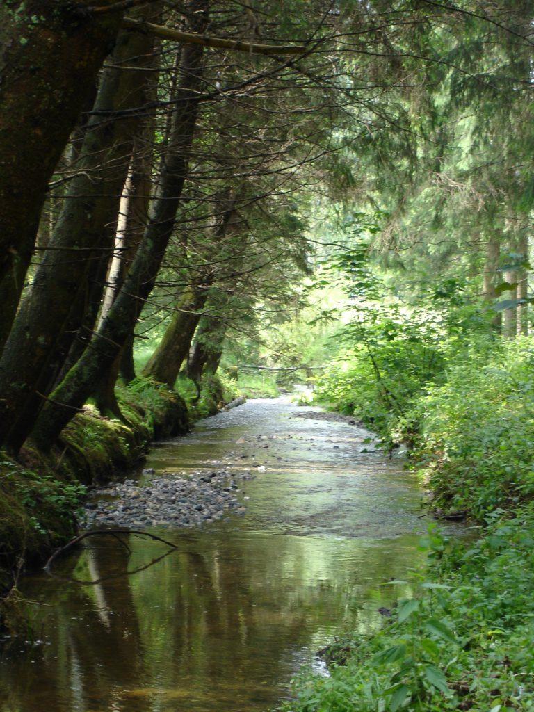 Beim Waldcamp plätschert ein Waldbach, dieser ergibt eine schöne Geräusch Atmosphäre beim Wald Baden
