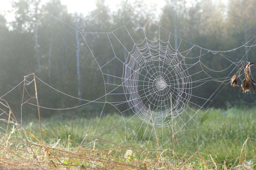 Spinnen Netz im Gegenlicht