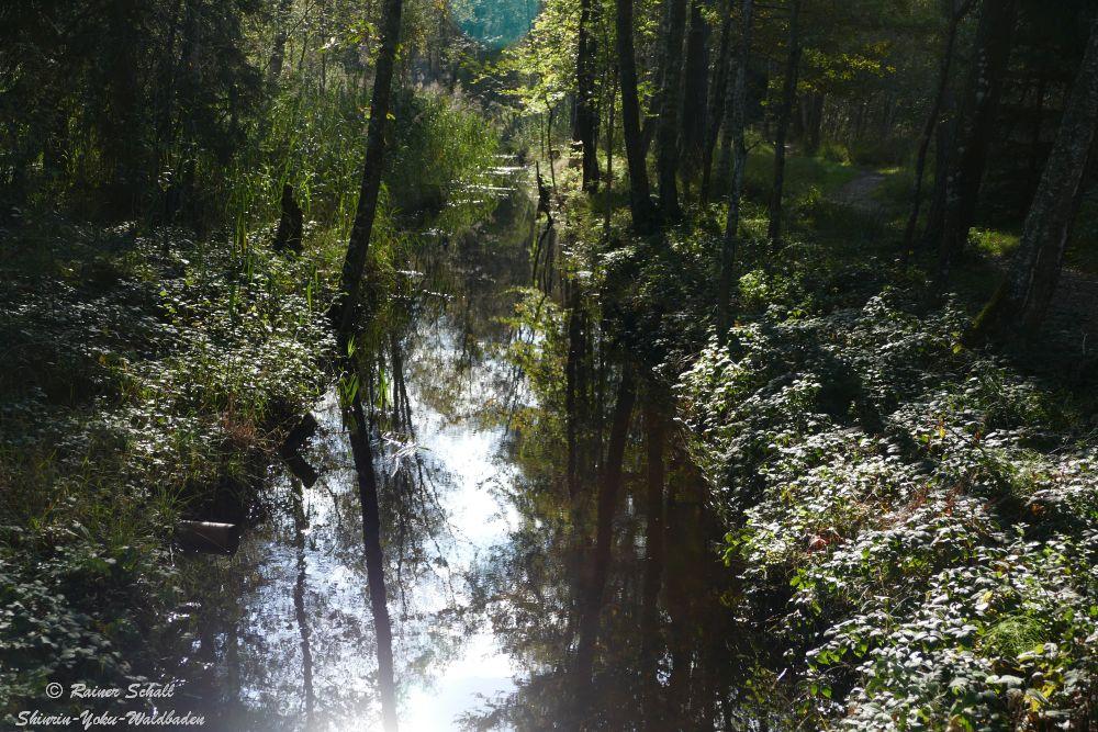 Ein Waldbach in dem sich die Bäume spiegeln