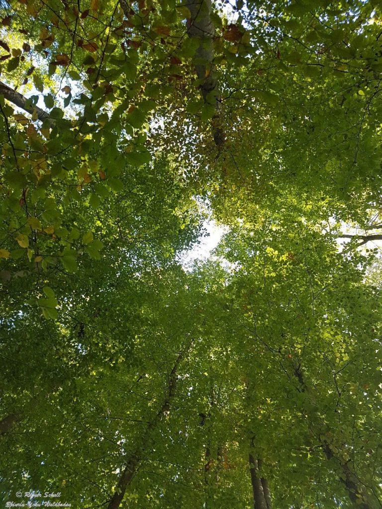 Baumkronen und ein kleines Fenster zum Himmel