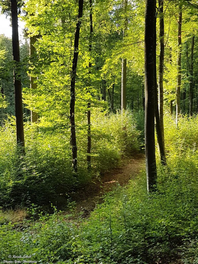 Buchen und Tannen sind unsere heimischen Bäume